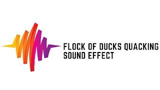 Flock of Ducks Quacking Sound Effect