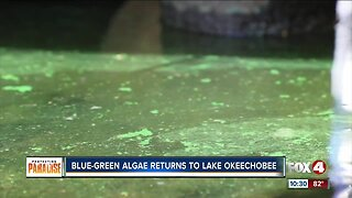 Blue-green algae found on northwest of Lake Okeechobee