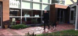 Biden's dog Major getting additional training