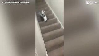 Seagull casually walks into house