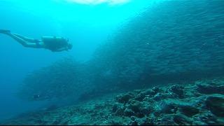 Scuba diver gets lost in enormous school of fish