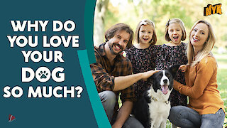Why do we love dogs? *