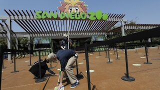 San Diego Zoo Vaccinates Apes Against COVID-19 After January Outbreak