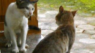 Cat fight cat