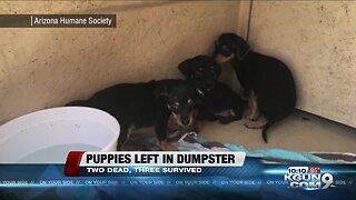 Five puppies abandoned in a duffel bag inside a Phoenix dumpster