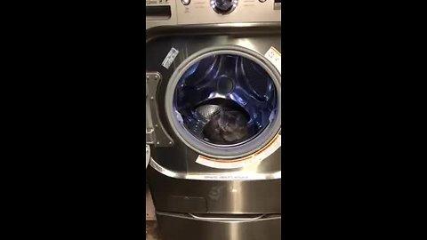 Cat decides to sleep inside washing machine