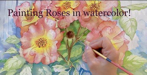 Painting Rose Flowers in watercolor - Wild Roses Woodsii