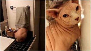 This cat has a hiding place when it's bath time