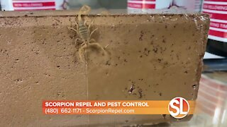 Scorpion Repel and Pest Control: Help keeping scorpions and bugs OUT of your home
