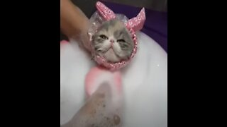 Cute Baby Animals Videos Compilation 💗 Cute Moment Of The Animals 07