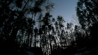 Lonely forest time lapse from day to night
