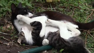 Kitten plays with mom