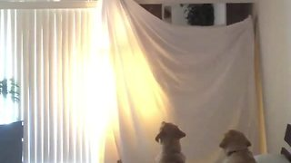 Dogs totally freak out over disappearing magic trick