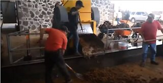 El Pandillo Tequila Distillery, Crushing Agave with Frankenstein Tahona