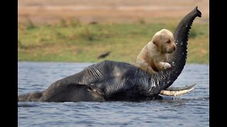 Animals Heroically Saving Other Animals Risking Their Own Lives!
