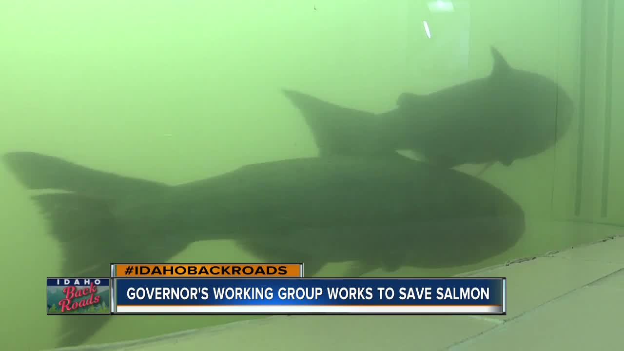 Salmon Working Group