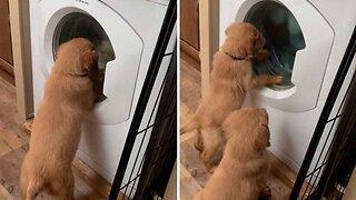 Adorable Puppies Watching Washing Machine Go Around And Around