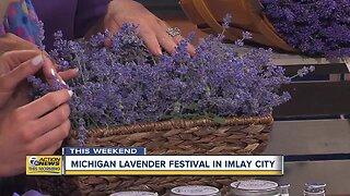 Michigan Lavender Festival returns to Imlay City