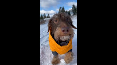 Funny dog video running un the snow