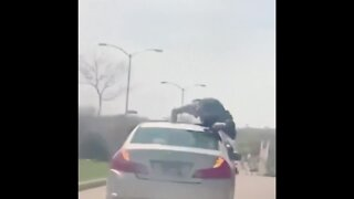 Milwaukee police search for man who did push-ups on moving vehicle