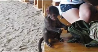 Rescued baby baboon will melt your heart!
