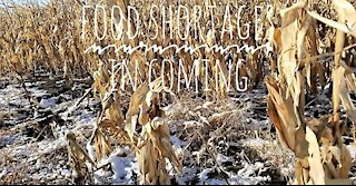 Food Shortages: Hard Truths