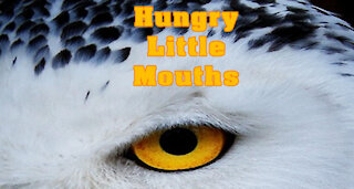 Horror Stories | Hungry Little Mouths