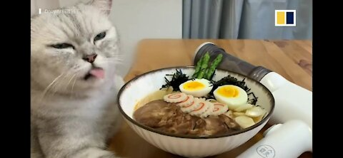 Cat cooking with her hands gone viral