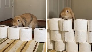 """Bunny rabbit adorably participates in """"level up"""" challenge"""