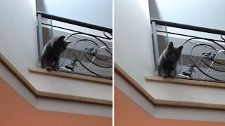 Cat plays game of indoor volleyball with his owner