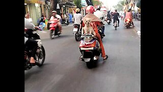 dog sitting on running motorbike (unbelievable)
