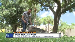 Pets healing vets: Program connects veterans to service dogs