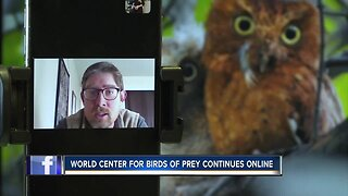 World Center for Birds of Prey moves to online demonstrations