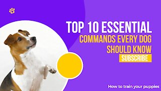 TOP 10 ESSENTIAL COMMANDS Every dog should know!!