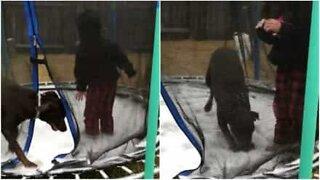 Denne hunden elsker å hoppe på den frosne trampolinen