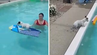 Talented dog shows off his amazing pool tricks