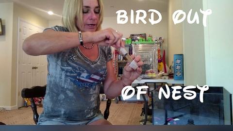 How To Help A Orphaned Bird