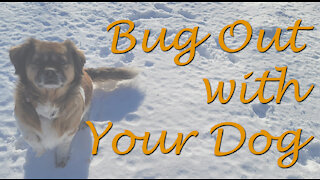 Bugging Out with your Dog when Disaster Strikes