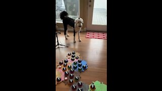 Dog pushes buttons when he wants to talk