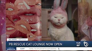 Pacific Beach rescue cat lounge now open