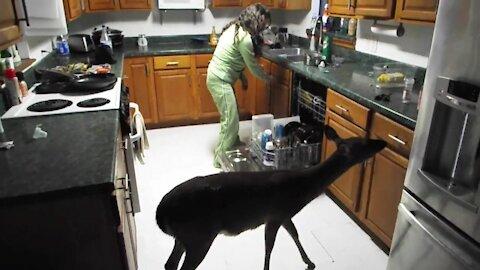Curious deer decides to walk into Texas home