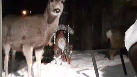 The Deer Are Back! This Video Has Sound....lol