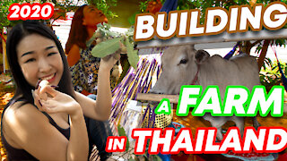 What's it like to Build a Farm in Thailand? Thai Rural Life in 2020