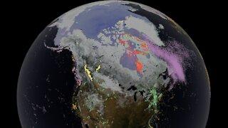 Visualisé : où vont les animaux lorsque les saisons changent ?