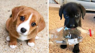 Adorable puppies to watch