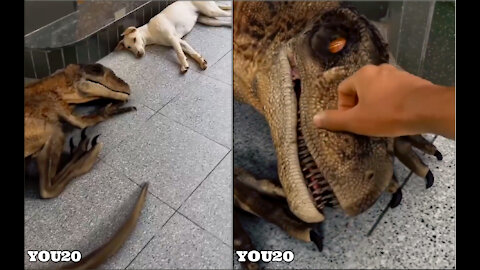 Oh my gosh this dinosaur looks so real, but they both look cute together 🐶🦖