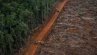 How Deforestation Helps Viruses Spread