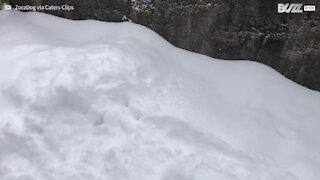 La neige est si épaisse que ce chien ne retrouve plus sa balle!