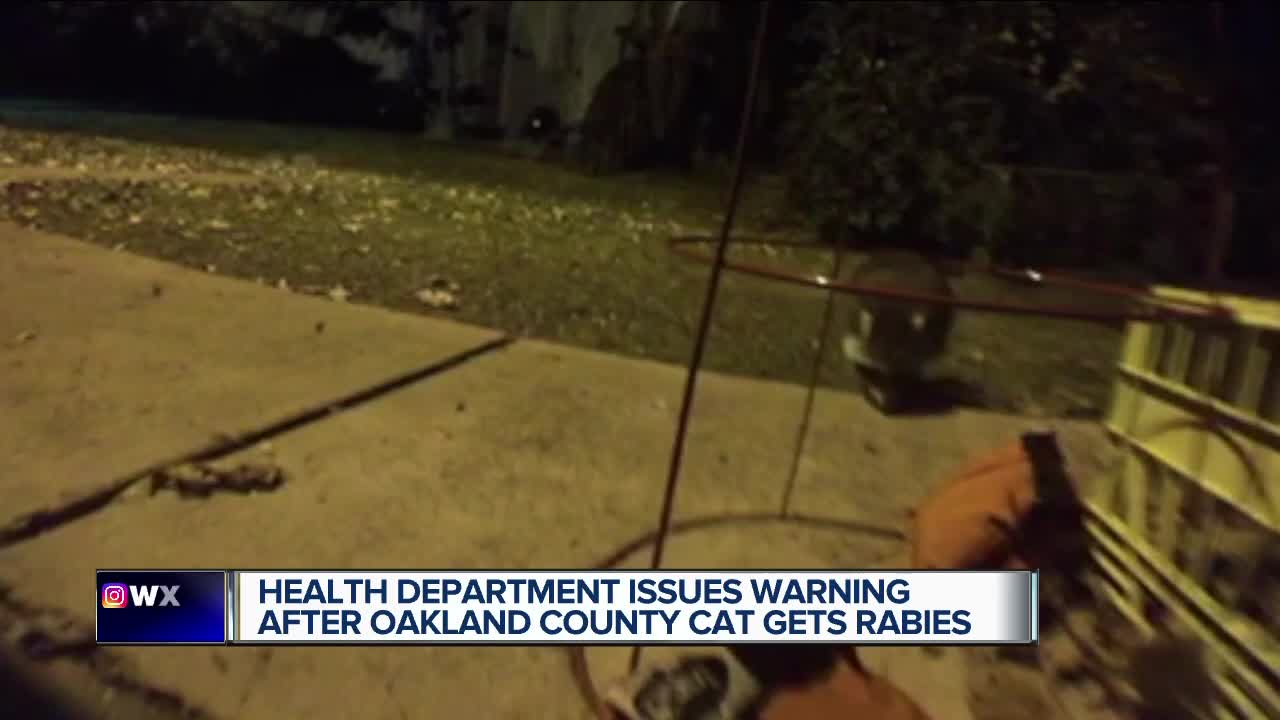 Health Department issues warning after Oakland County cat gets rabies