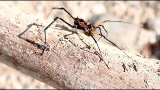 Spider walking on tree